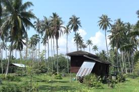 In der Gegend von Tha Chang