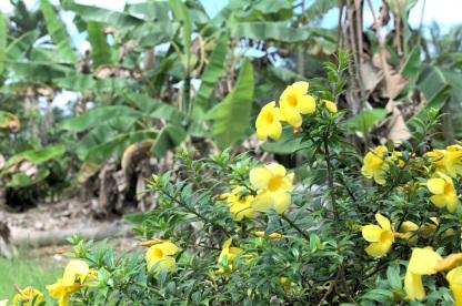 Blüten am Straßenrand