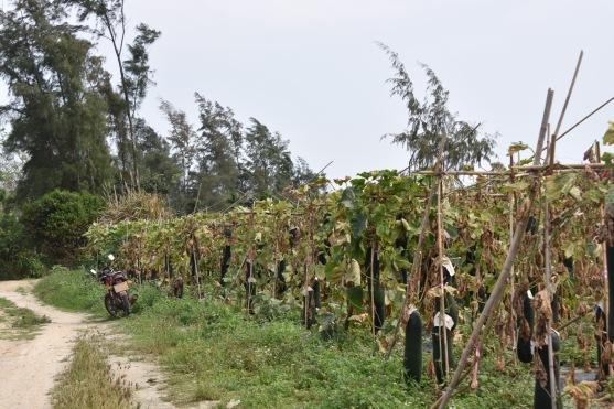 Unbekanntes Gemüse an Stangen