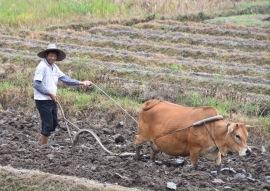 Dörflicher Ackerbau irgendwo in der Provinz