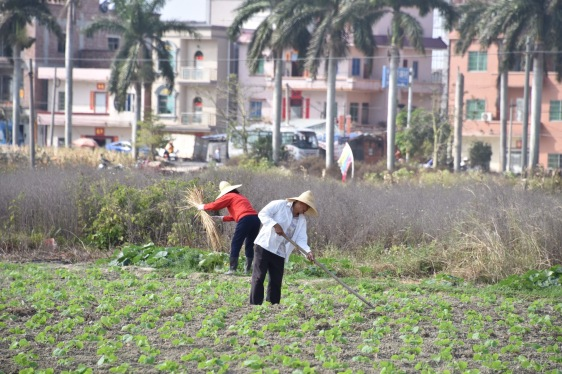 Salatpflege am Rande der Großstadt