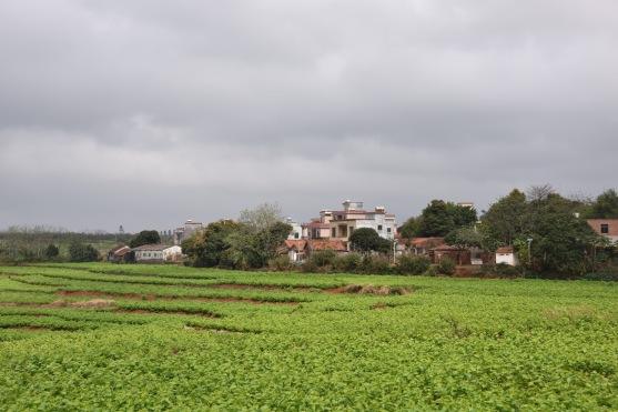 Gemüse-Terrassenanbau
