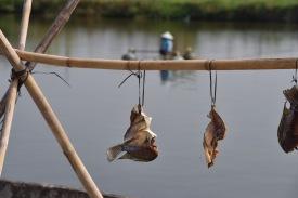Direkt aus dem Teich zur Trocknung